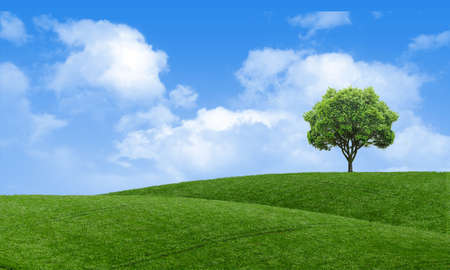 Green summer landscape scenic view wallpaper. Beautiful wallpaper. Solitary tree on grassy hill and blue sky with clouds. Lonely tree springtime. Green planet earth. Photo stock. Stockfoto