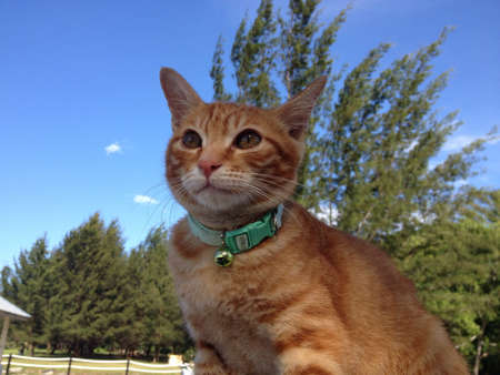 otganimalpets01: I wanted to be a supercat boring with running and walking. Van be model too