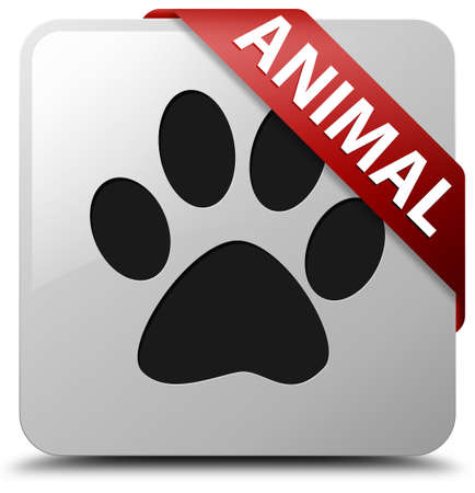 tracks live: Animal glossy white square button