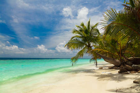 tropical leaves: Palm trees on the shore of the Maldives