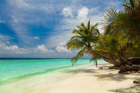 fruta tropical: Palmeras en la orilla de las Maldivas Foto de archivo