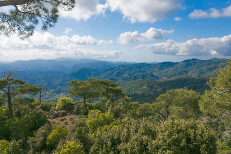 The view of Troodos mountains from top. With cedars on the foreground
