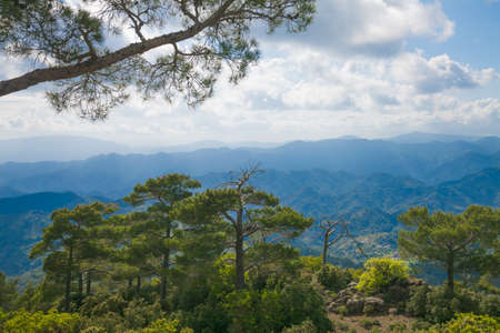 cedars: The view of Troodos mountains from top. With cedars on the foreground
