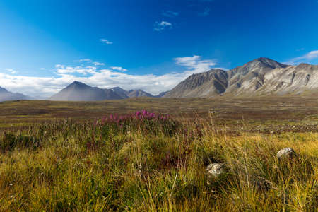tundra: The Colorful autumn Chukotka tundra, Arctic Circle Russia