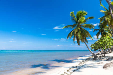 republic dominican: tropical sand beach with palm trees, Dominican Republic
