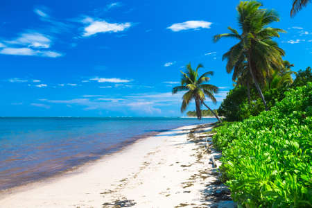 dominican: Beautiful caribbean sand beach in Dominican Republic Stock Photo