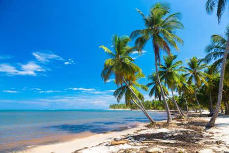 ocean plants: Palm tree bent over the ocean, Dominican Republic