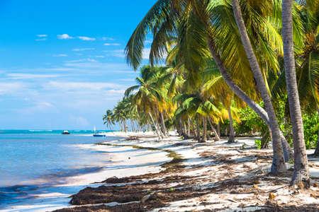 carribean: Many coconut palms on the wild carribean beach, Atlantic ocean, Dominican Republic.