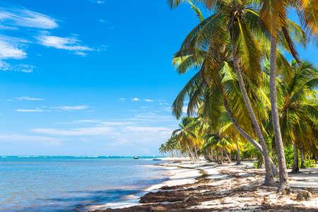 bent over: Palm trees bent over the ocean, Dominican Republic.