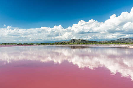 lake: Pink water salt lake in Dominican Republic