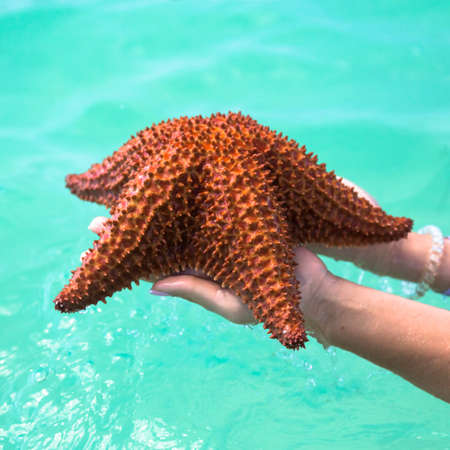 oreaster reticulatus: beautiful colorful starfish in girl hands in blue bright summer water. Stock Photo