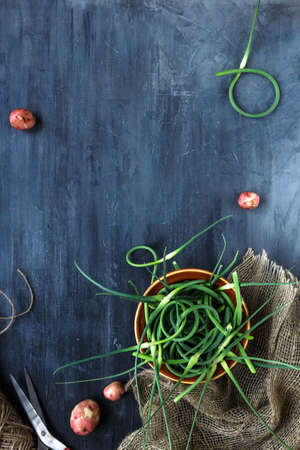 twisty: Fresh garlic sprouts on a dark background, top view, place for text