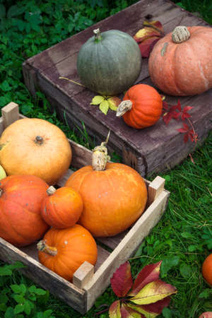 Colorful autumn decoration of pumpkins and squashes varieties.