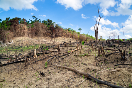 La deforestazione in El Nido, Palawan - Filippine Archivio Fotografico - 28647370