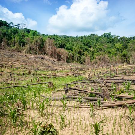 Deforestation in El Nido, Palawan - Philippines photo