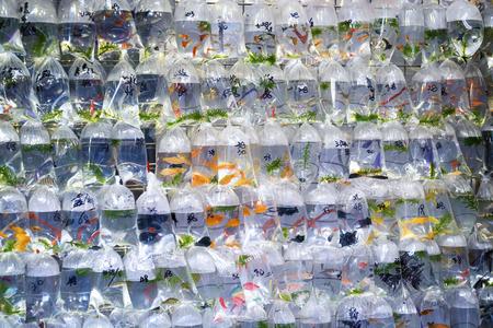Aquarium fish displayed in plastic bags for sale in the Goldfish market in Mong Kok, Hong Kong. photo