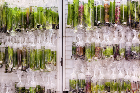 Aquarium plants displayed in plastic bags for sale in the Goldfish market in Mong Kok, Hong Kong. photo