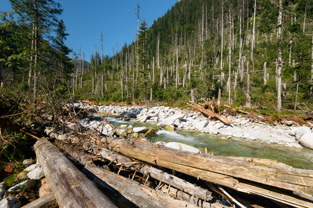 Driftwood and mountain stream in the High Tarta