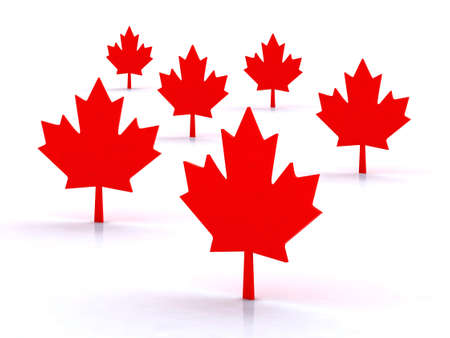 maple leafs canadian symbol, 3d illustration