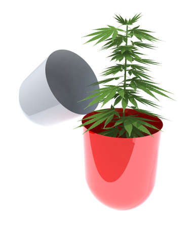 recreational drug: open pill with a marijuana plant inside, 3d illustration