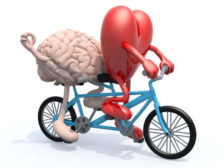 enamorados caricatura: cerebro humano y el corazón con los brazos y las piernas que montan bicicleta tándem, ilustración 3d