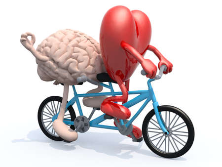 two hearts together: human brain and heart with arms and legs riding tandem bicycle, 3d illustration