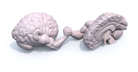 discord: two half brains that make arm wrestling, 3d illustration Stock Photo