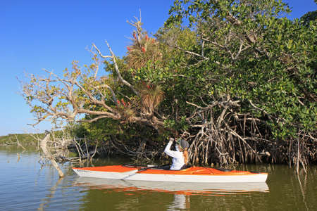 Everglades National Park, Florida 04-04-2015 Woman kayaks amidst the mangroves and snags of West Lake in early morning.