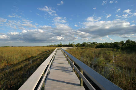 The Pa-Hay-Okee boardwalk in Everglades National Park, Florida, on the edge of an expanse of sawgrass.