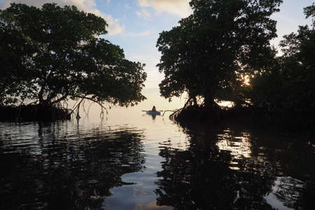 Mangrove trees silhouetted against the dawn sky in Bear Cut off Key Biscayne, Florida, framing a lone kayaker in the background.