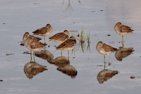 Sandpipers in shallow water on Fort De Soto State Park, florida.