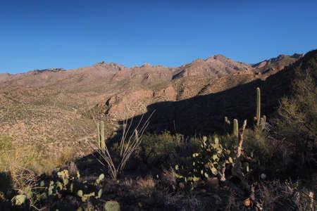 Desert landscape on the Blacketts Ridge Trail in Saguaro National Park near Tucson, Arizona. Stock Photo