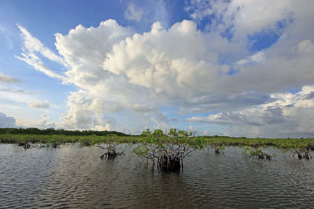 Mangrove trees under a dramatic cloudscape in the shallows of Barnes Sound, Florida.