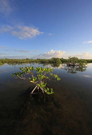 Mangrove trees and clouds reflected in the serene water of Barnes Sound, Florida, in early morning light.