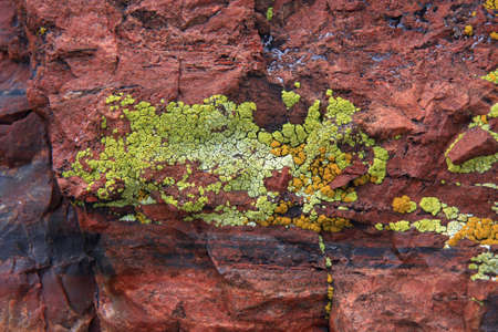 Closeup of colorful lichen on petrified wood in Petrified Forest National Park, Arizona. 免版税图像
