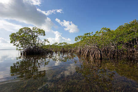 Cloudscape and Mangrove coast relfected in the waters of Biscayne National Park, Florida. Stok Fotoğraf