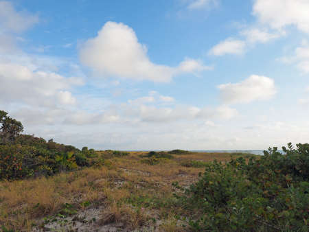 Sand dunes and vegetation of Bill Baggs Cape Florida State Park in Key Biscayne, Florida.