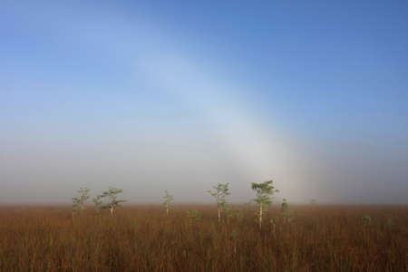 Fogbow over the Sawgrass Prairie in Everglades National Park, Florida.