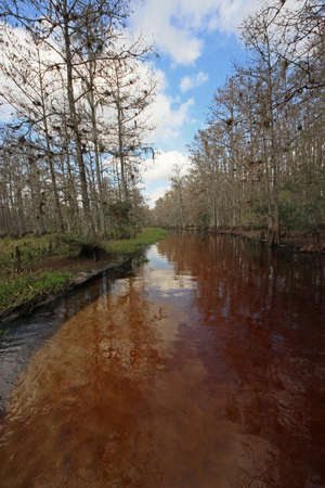 Fisheating Creek, Florida, on a calm and sunny winter afternoon. Stock Photo