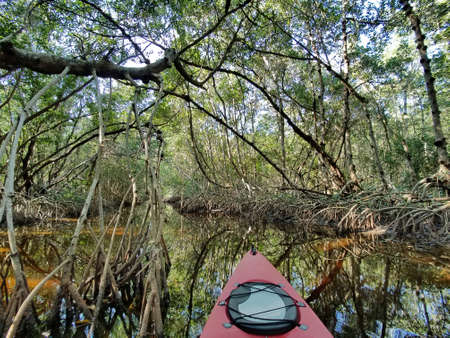 Red kayak in a mangrove tunnel between Coot Bay Pond and Coot Bay in Everglades National Park, Florida. 免版税图像