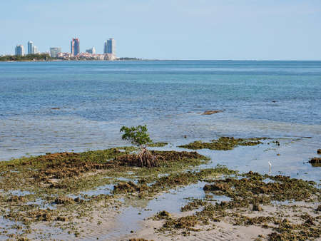 View of the Fossilized Reef and Bear Cut on Key Biscayne, Florida, at low tide, with buildings of Miami Beach in the background.
