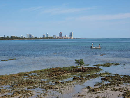 Fishermen off the Fossilized Reef in Bear Cut on Key Biscayne, Florida, at low tide with buildings of Miami Beach in the background.