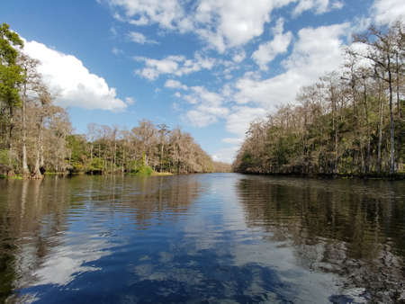 Fisheating Creek, Florida, and its forested banks of cypress and oak trees reflected in its still waters in late autumn.