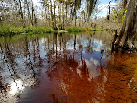 The clear but tannin stained water of Fisheating Creek, Florida, giving it a rich reddish brown appearance over the white sand in the shallows. Stock Photo