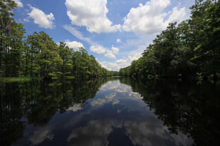 Fisheating Creek, Florida on calm early summer afternoon with perfect reflections of Cypress Trees and clouds on tranquil water.