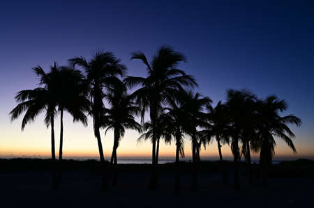 Palm trees silhouetted against pastel colors of twilight on Crandon Park Beach in Key Biscayne, Florida.