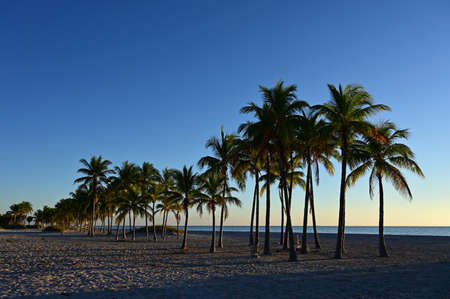 Palm trees partially silhouetted against sunrise on Crandon Park Beach in Key Biscayne, Florida.