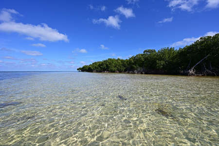 Clear shallow water of Bear Cut off Key Biscayne, Florida at low tide on sunny summer afternoon.