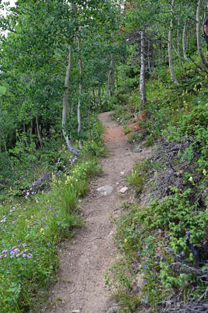Hassell Lake Trail in Arapaho National Forest, Colorado on sunny summer afternoon.