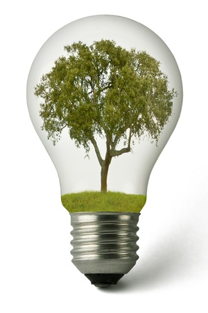 Lightbulb with a plant growing inside Stock Photo